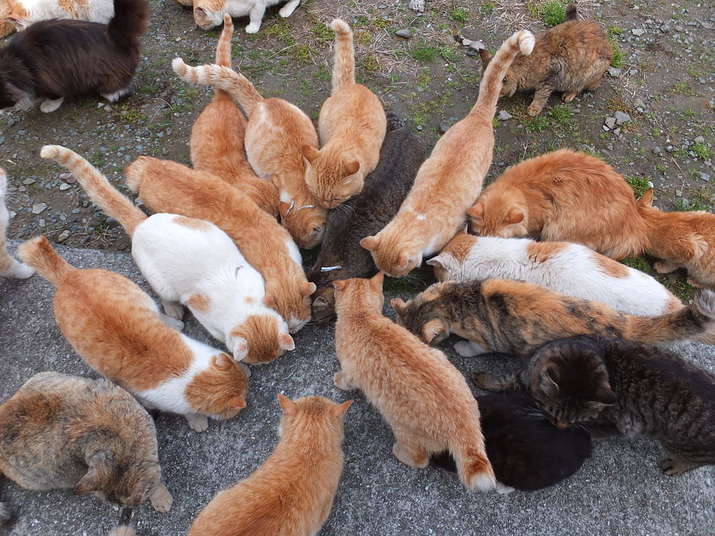 cat island  places to visit japan