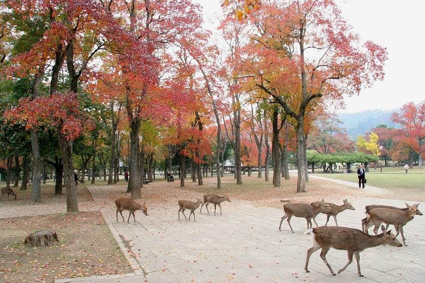 nobori-oji street deers japan itinerary