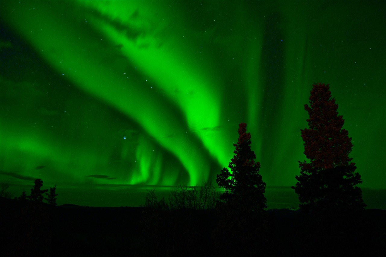 green northern lights iceland in forest
